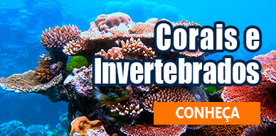 Corais e Invertebrados