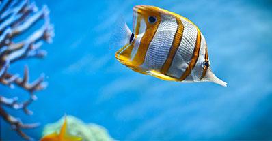 Comprar Peixes